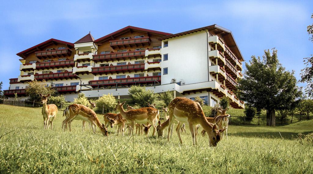 Unser hirschpark wildspezialit ten aus der eifel for Design hotel in der eifel